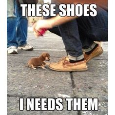 Funny Animal Memes For You To Laugh Loud Pics) Awed! Owl - Funny Animal Quotes - - Funny Animal Memes For You To Laugh Loud Pics) Awed! Owl The post Funny Animal Memes For You To Laugh Loud Pics) Awed! Owl appeared first on Gag Dad. Cute Animal Memes, Funny Animal Quotes, Animal Jokes, Cute Animal Pictures, Cute Funny Animals, Cute Baby Animals, Funny Cute, Dog Pictures, Dog Quotes
