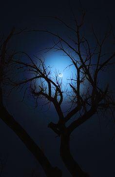 November Moon -Johnny Gomez