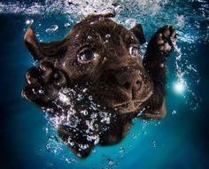 Photos of Puppies Underwater