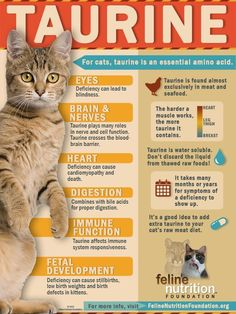 """No Bull, Taurine Is a Must for Kitty"" - Feline Nutrition. Great new article by Marta Kaspar. Downloadable taurine infographic!"