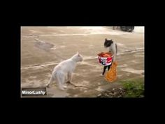 "https://t.co/bK7cxSlmnZ  Top Funny Cats FAILS 2013 http://img.youtube.com/vi/CUI45W0YtEE/0.jpg *Powered by SG*  Hey if you liked it please give us thumbs up and share it. v2 is coming up so subscribe if you want to see more. Credits to Artists Of : I beleieve I can fly Nuclear … *Powered by SG* Please follow and like us:  			var addthis_config =  				 url: """", 				 title: """" 			 			   http://100review.com"