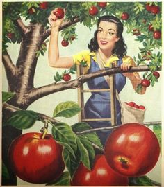Apple Picking- Vintage Style!