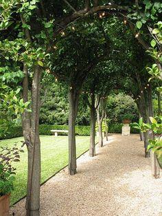 Busy at Home: pleached tree arbor loose graded pebble path focal point Garden Trees, Garden Paths, Lawn And Garden, Garden Landscaping, Landscape Design, Garden Design, Baumgarten, Covered Walkway, Interior Exterior