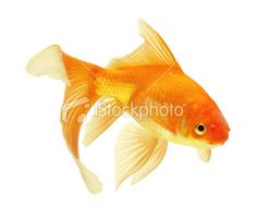 My two gold fish Hulio and Gus Gus!!