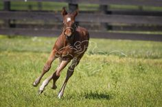 Is Awesome Again's colt starting to run or just stretching his legs?