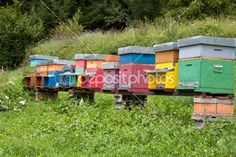 Colorful Beehives on a meadow by Harald Biebel - Stock Photo
