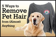 5 Ways to Remove Pet Hair from (Almost) Anything