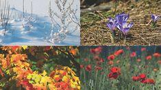 Neljä vuodenaikaa Plants, Plant, Planets