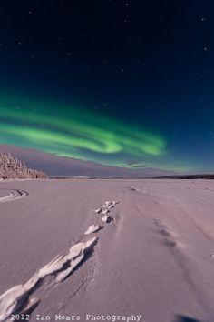 Northern Lights in Lapland Lapland Finland, See The Northern Lights, Midnight Sun, Natural Phenomena, Aurora Borealis, Homeland, Amazing Places, Arctic, Winter Wonderland