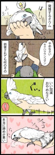 漫画「いたずらオウムの生活雑記」 (174) 発情オウム | ライフスタイル | マイナビニュース