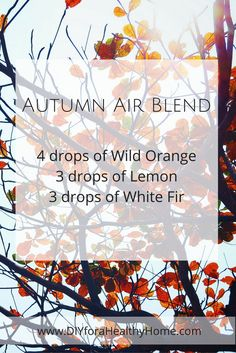 Autumn Air Blend - 4 drops of Wild Orange, 3 drops of Lemon and 3 drops of White Fir