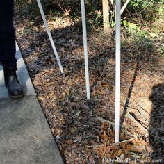 She sticks PVC pipes into the dirt by her walkway. The result? Gorgeous!