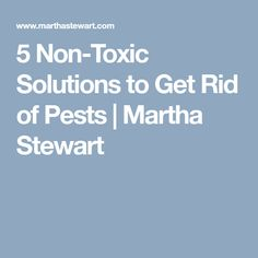 5 Non-Toxic Solutions to Get Rid of Pests | Martha Stewart