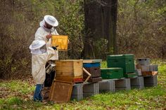 Beekeeping fights a deadly environmental crisis, rewards you with stress-relief and offers you an extra source of income. Best Of Intentions, Habitat Destruction, Bee Boxes, All Fruits, Natural Health Tips, White Ducks, Bee Keeping, Agriculture, Habitats