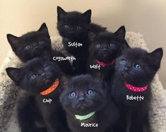 """When They Saved This Cat From The Cold, They Didn't Know They'd Get 6 Bonus """"Panther"""" Kittens 