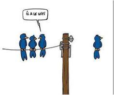 Blog de strangerzin :new-zinfa-style, Quand les oiseaux passent au wifi