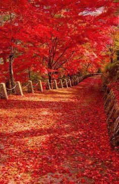 Nara - Japão