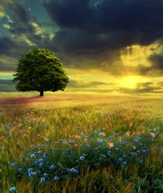 when i found god my eye caught the beauty of tree's.