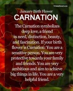 January Birth Flower : Carnation