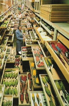 Feather identification expert Roxie Laybourne, amidst a portion of NMNH's bird collection.  Photo credit: © Chip Clark