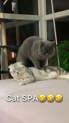 Exceptional funny cats tips are available on our web pages. Read more and you wont be sorry you did. Funny Animal Memes, Funny Cat Videos, Cute Funny Animals, Funny Animal Pictures, Cute Baby Animals, Animals And Pets, Funny Cats, Animal Humor, Funny Photos