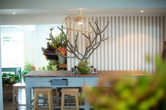 The Boathouse Palm Beach   Fresh Modern Australian cuisine and contemporary allotted furnishings + interiors