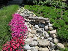 Love the combination of size rocks here with the pop of color. I want to add a dry creek bed in my yard I love the way they look.