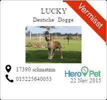 Lucky/Deutsche Dogge/vermisst