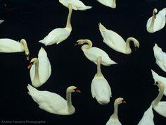 swan pattern - Google Search