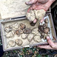 So You've Got a Truffle? Cool. Here's How to Keep It Fresh