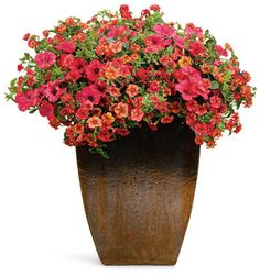 2013 patio containers