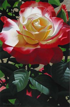 Captivating Why Rose Gardening Is So Addictive Ideas. Stupefying Why Rose Gardening Is So Addictive Ideas. Beautiful Rose Flowers, Love Rose, All Flowers, Flowers Nature, Exotic Flowers, Amazing Flowers, Purple Flowers, Ronsard Rose, Coming Up Roses
