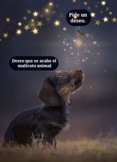 Quotes love anime dogs Ideas for 2019 Amor Animal, Mundo Animal, Dog Quotes, Cute Quotes, Funny Quotes, Animals And Pets, Cute Animals, Funny Mom Memes, Dog Tattoos