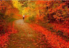 Autumn leaves, upstate New York...