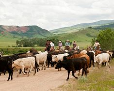 On Double Rafter Cattle Drive Vacations guests ride as much as 25 miles a day, camp out, and eat over an open fire, taking guests back to life as a cowboy in the late 1800s.