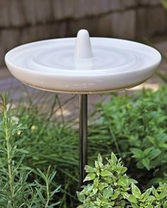 To combat flies and mosquitoes, Rebecca invited birds into her yard by placing a bath in the garden. Bonus: Any water splashed by excited birds gets absorbed by the plants. Birdbath, by Eva Solo; emmohome.com.