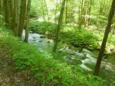 Little River Trail, GSM
