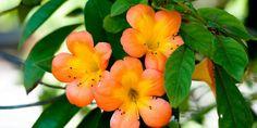 Flowers Small Petals
