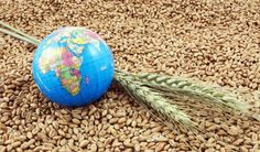 Hilal Elver, the newly appointed United Nations special rapporteur on the right to food, will participate in two UCLA School of Law events. Trade Association, Food Security, Food Photo, Royalty Free Images, Canning, Global Food, Business, University, March