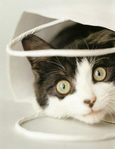 """It's easier to let the cat out of the bag than to put it back in again."" --Mark Twain"