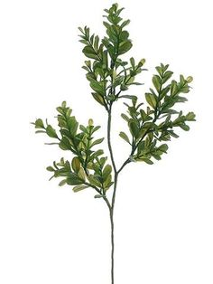 Boxwood Leaf from Afloral.com is a perfect way to add greenery to your wedding bouquets and DIY wedding centerpieces.