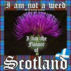 Edinburgh Scotland, Scotland Travel, Scottish Quotes, Men In Kilts, Scottish Clans, My Heritage, Family History, Glasgow, Scottish Culture