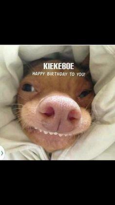 New funny good morning memes humor Ideas Funny Shit, Funny Cute, Funny Memes, Hilarious, Memes Humor, Funny Dogs, Cute Dogs, Funny Animals, Cute Animals