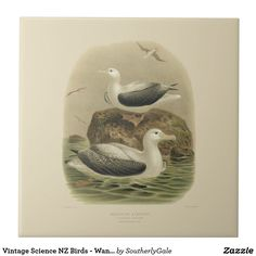 Vintage Science NZ Birds - Wandering Albatrosses Large Square Tile