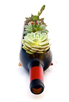 The Original Wine Bottle Garden // Succulent by BottleGardens