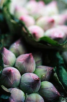 Lotus flowers on the Parklong market, Bangkok