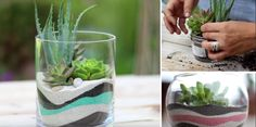 This video, provided by Garden Answer, contains a tutorial on how to grow succulents in a planter filled with attractive layers of decorative sand. A glass planter that holds succulents above several distinct layers of colored sand looks stunning. Unfortunately, it is a bit difficult to provide the plants with a good growing environment while …