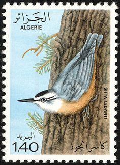 мар32http://www.birdtheme.org/country/algeria.html