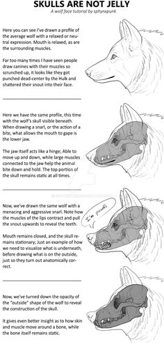 Canine head - Mini Tutorial: SKULLS ARE NOT JELLY! by sphynxpunk