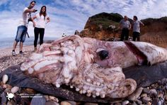 The pictures was shot at Newport Beach, California 10 years ago. One morning, these giant squids were found all over the beach. Nobody knows why the end up out of water on that beach.